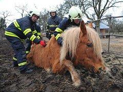 Postavit koně na nohy vlastními silami se hasičům nepodařilo. Došlo tedy na použití techniky.