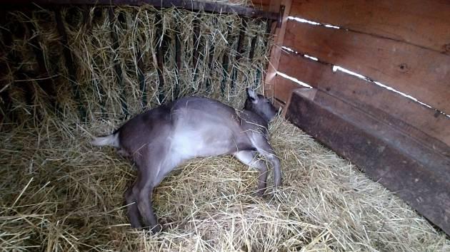 Uhynulá zvířata v pražském zookoutku.