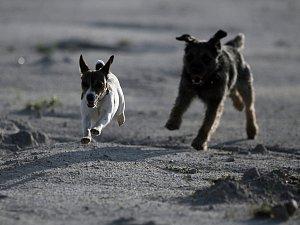 K volnému vyběhání psů by měl sloužit park