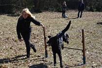 Cvičení psů proběhne v Riegrových sadech.Ilustrační foto.