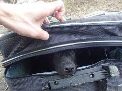 Při obchůzce svého okrsku v Praze 5 nalezl strážník městské policie ve třech kufrech a pytli osm štěňat