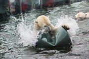 Kromě průvodu se mohou návštěvníci těšit i na předání dárku pražským ledním medvědům spojené se speciálním komentovaným setkáním.