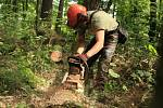 Boj s kůrovcem v pražských lesích.