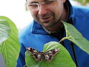 Výstava exotických motýlů ve skleníku Fata Morgana letos již po patnácté.