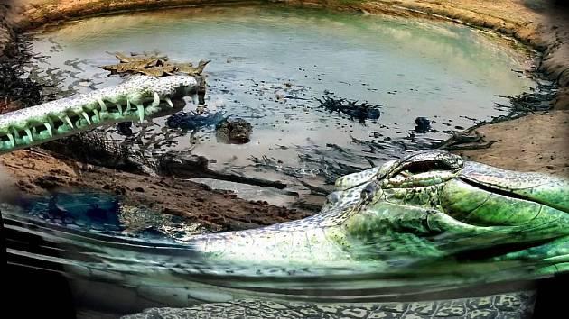 V jednotlivých otvorech najdou návštěvníci unikátní záběry zvířat a jejich domovské krajiny, kterou se snaží Zoo Praha dlouhodobě chránit.
