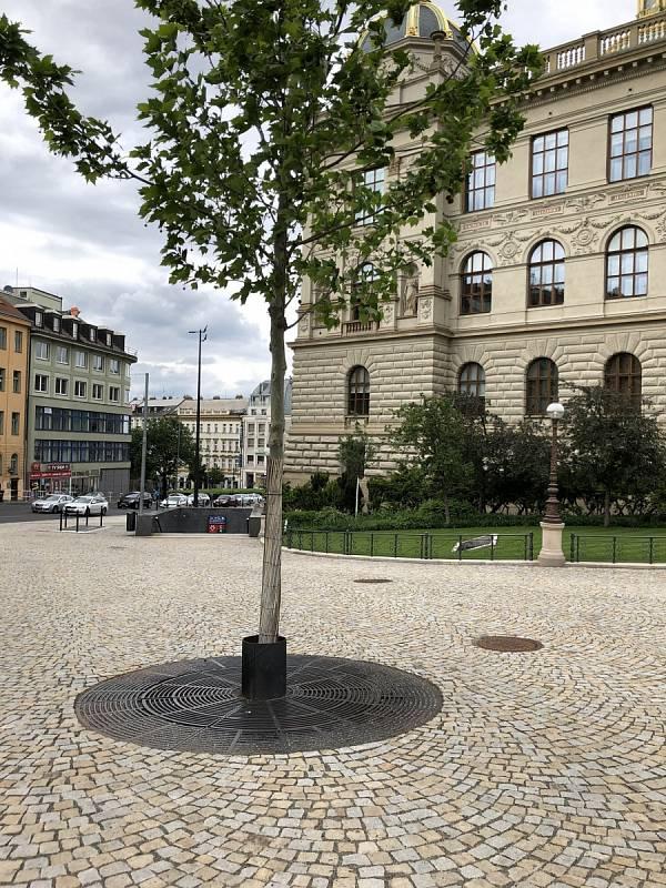 Magistrátní Institut plánování a rozvoje ukazuje dobrý příklad péče o městskou zeleň. Na snímku jsou Čelakovského sady.
