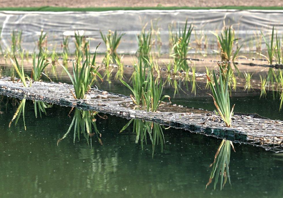 Speciální vodní rostliny, řasy a filtry budou čistit vodu. Ta bude vhodná i pro alergiky.