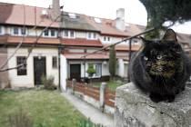 Hned na začátku focení mě mezi zahrádkami domů přivítala kočka. Já měl radost, ona si mě nevšímala.