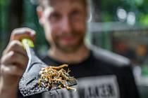 Dokážete ochutnat hmyzí dobroty? Zoo Praha chystá tradiční akci Víkend hmyzožravců.
