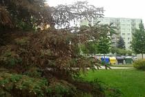 Pražské stromy musí čelit škůdcům, nedostatku vody či vandalům. Ilustrační foto.