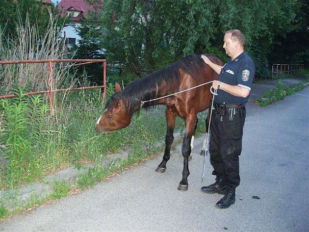 Strážníci honili koně nočními ulicemi.