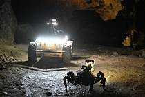 Roboti v jeskyni Býčí skála v Moravském krasu.