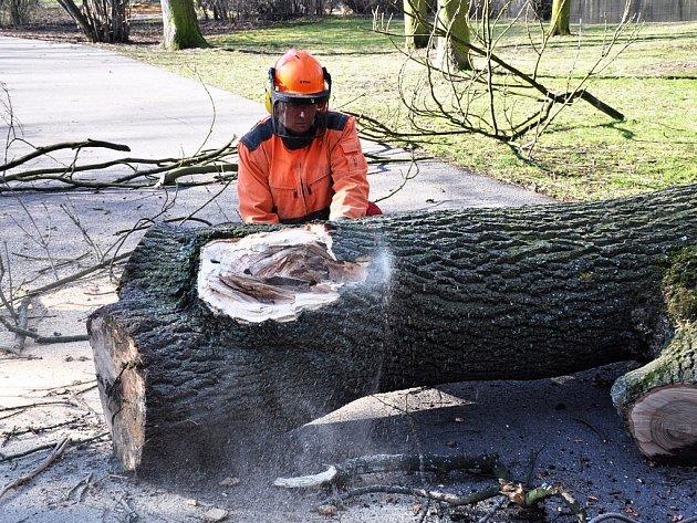 O osudu stromů rozhodují úřady. Někdy dobře, jindy zase nikoliv. Náprava případné škody trvá ale celé století, než nový strom plní svou funkci ozdravění ovzduší.
