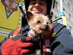 Několik psů menších plemen i většího hafana zachraňovali ve středu dopoledne pražští hasiči při požáru na Vinohradech.