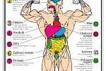 Škodlivost a vedlejší účinky anabolických steroidů.