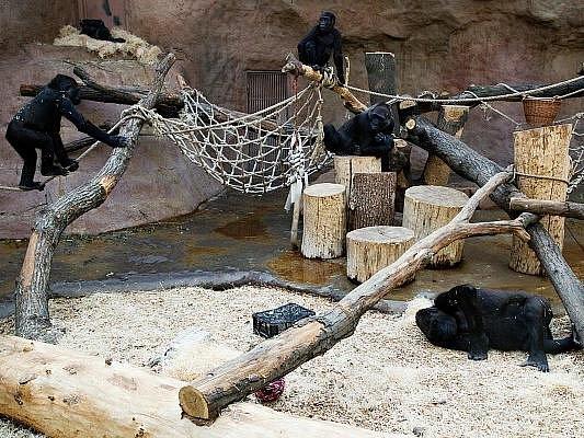 Situace v Pavilonu goril se stabilizovala.
