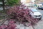 Likvidace ulomeného stromu v Nuslích.