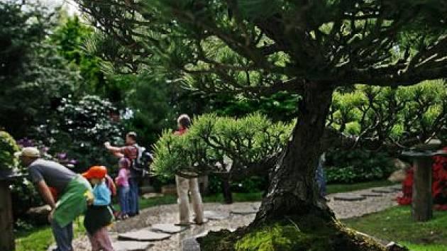 JAPONSKÉ ZÁTIŠÍ. Oceňovaná část botanické zahrady je dílem Kamily Skálové.