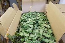 Celníci zajistili zásilku čerstvých listů zaderahu indického.