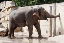 Pražská zoo vstupuje do své 78. sezóny.