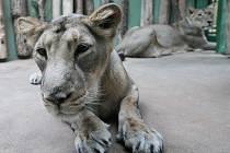 Jamvana, Suchi a Ginni mohou návštěvníci pražské zoo vidět v Pavilonu šelem a plazů.