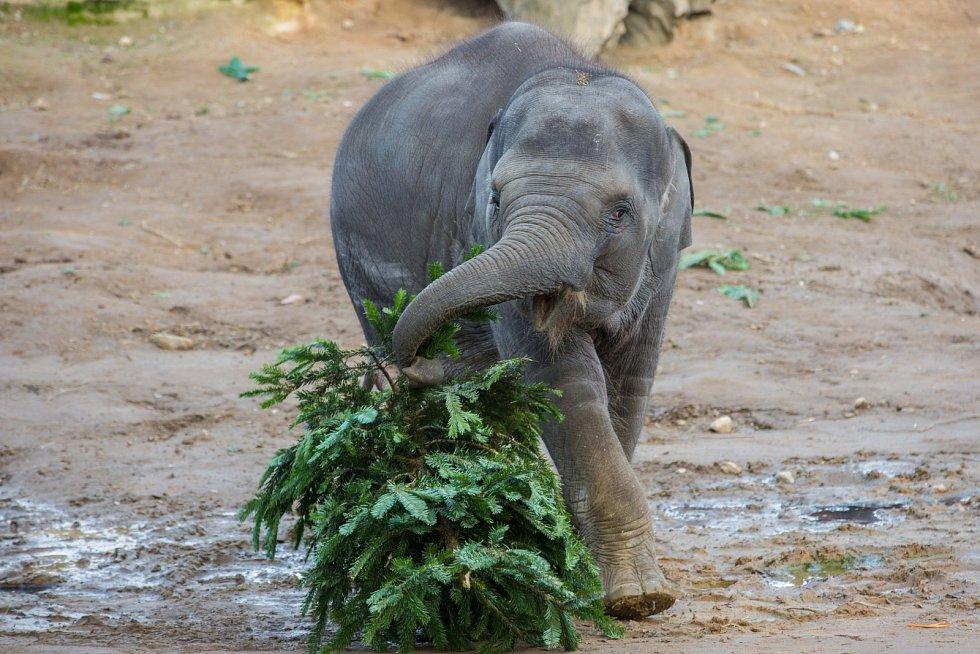 Nejvíce si stromečky užívá malá Sita.