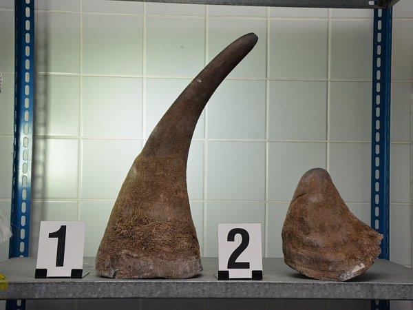 Nosorožčí rohy