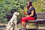 Středisko výcvikových psů v pražských Jinonicích připravuje, cvičí a zkouší psy pro zrakově postižené občany.