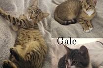 Krásná koťátka hledají nový domov. Bude to ten váš?