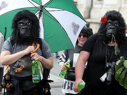 Na trať Běhu pro gorily, charitativní akce zaměřené na záchranu těchto zvířat ve volné přírodě, v sobotu vyběhlo přes 400 lidí.