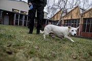 Den otevřených dveří v psím útulku v Praze Troji.
