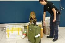 Fenka belgického ovčáka jménem Boxy je jediný speciálně vycvičený služební pes na vyhledávání finanční hotovosti v České republice.