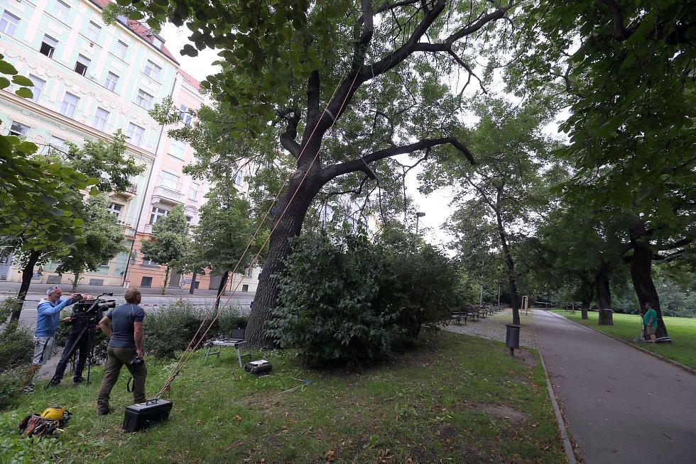Druhý den byly kvůli nebezpečí pádu stromů uzavřeny Sady Svatopluka Čecha a také část Vinohradské ulice a probíhal zde dendrologický průzkum.