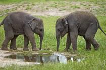 Sloní samičky v Zoo Praha už mají jména.