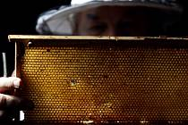 Včelařství. Ilustrační foto.