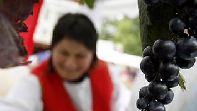 Na náměstí Míru začalo v pátek Vinohradské vinobraní.