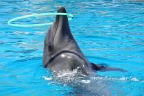 Delfín. Ilustrační foto.