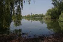 Biologický rybník v Horních Počernicích.