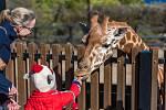 V zoologické zahradě. Ilustrační foto.