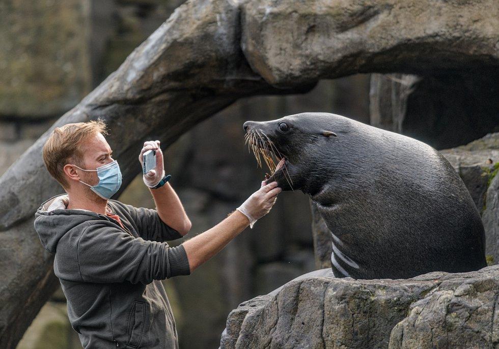 Velmi úspěšná jsou videa vrchního chovatele Jakuba Mezeie zachycující práci s lachtany. Při jejich natáčení padl jeden Samsung Galaxy S20 za oběť zubům samce Melouna.