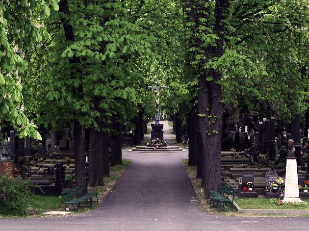 Oblíbená místa Honzy Homoly - Vinohradské hřbitovy.