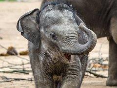 V sobotu se uskuteční v Zoo Praha oslava prvních narozenin slůněte Rudiho.