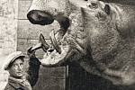 Hroch Petr krátce po příchodu do Zoo Praha se svým ošetřovatelem Bohumilem Krinertem.