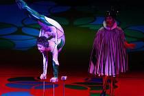 V pražské O2 Areně se 12. listopadu uskutečnilo vystoupení artistické umělecké skupiny Cirque du Soleil s názvem Saltimbanco.