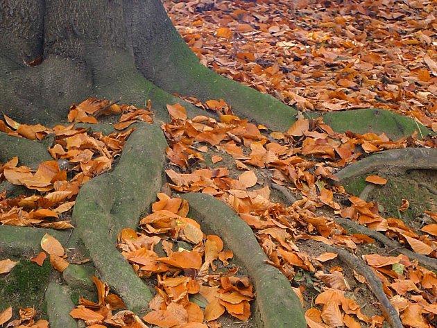 Kořeny stromu. Ilustrační foto.