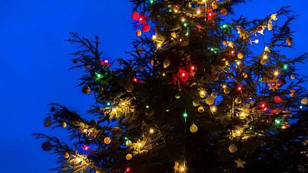 První adventní neděli pražská zoo společně se svými návštěvníky a významnými hosty rozsvítí vánoční strom.