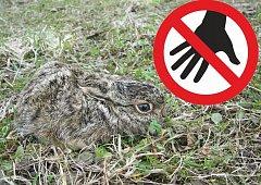 Neberte zajíčky.