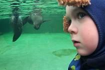 NÁVŠTĚVNÍCI MOHOU lachtany sledovat i pod vodou.