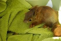 Záchranná stanice v horkých letních dnech přijímá hlavně ježky, veverčata či ptáčata