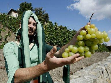 NASTAL ČAS SKLIZNĚ A OCHUTNÁVÁNÍ. Vinná réva na vinici v Havlíčkových sadech dozrála, všichni jsou zváni na vinobraní.